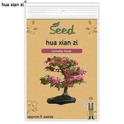 coltivare outdoor in vaso 1000 idee su piante in vaso su piante in vaso