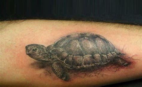 designs for 7 gentle turtle designs for style presso