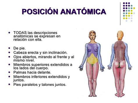 anatoma para posturas de 01 introduccion a la anatomia