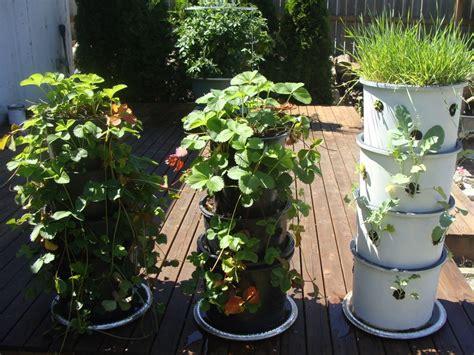 space saving diy vertical gardens the owner builder network