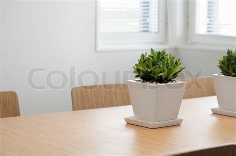 Dining Table Plants Modern Dining Room With A Plant On The Table Stock Photo Colourbox
