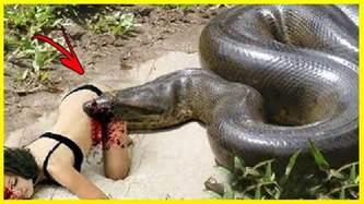 les serpents les plus dangereux du monde