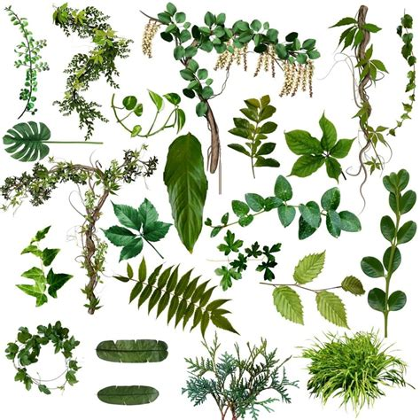 types of foliage plants types of leaves flowers foliage