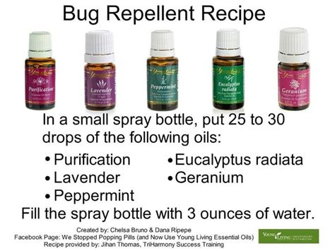 scents that repel bed bugs 17 best images about must try on pinterest sore throat