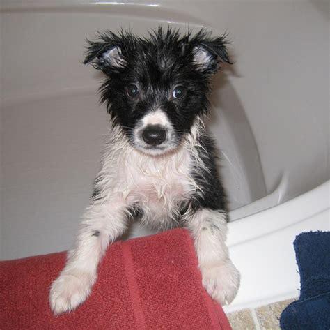 puppy bath time puppy bath time pet in the bath