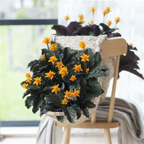 Plantes Appartement Sombre by 13 Plantes D Int 233 Rieur Increvables Gamm Vert