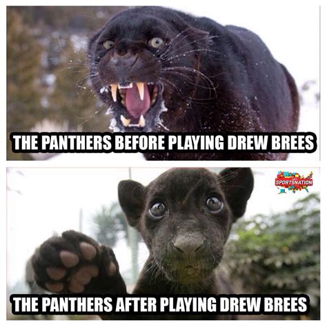Panthers Memes - panthers suck meme search results dunia pictures