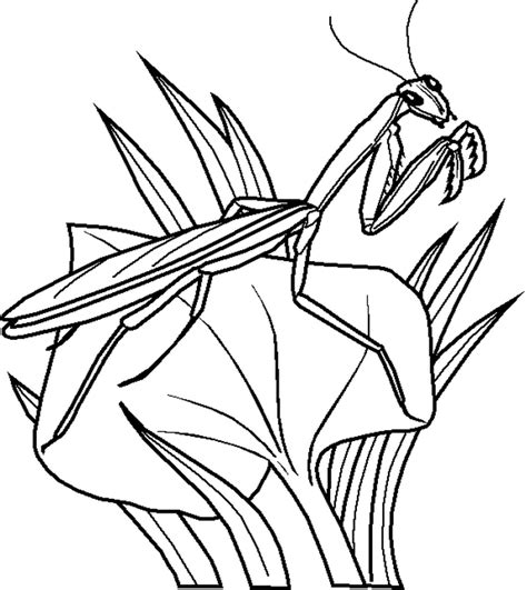 Free Printable Bug Coloring Pages For Kids Insect Coloring Page