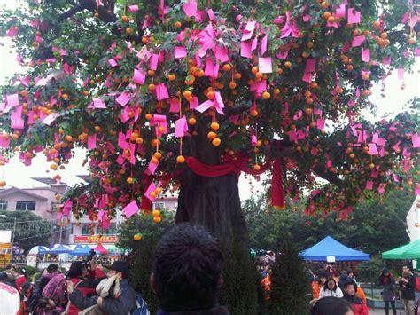 lam tsuen wishing tree new year wishing trees well wishing festival simple cherishes