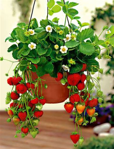 hanging strawberry planter build your hanging strawberry planter in eight level