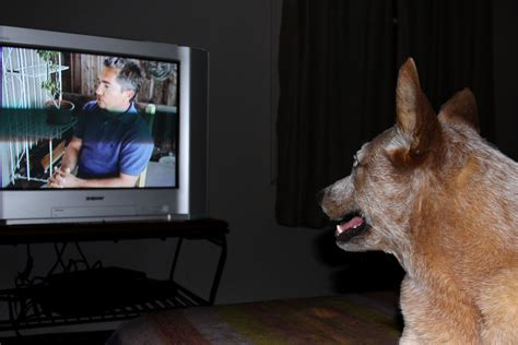 puppy tv file tv jpg wikimedia commons