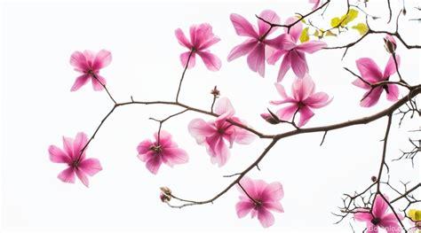 Blossom Tree Wall Stickers magnolias winter flowering trees