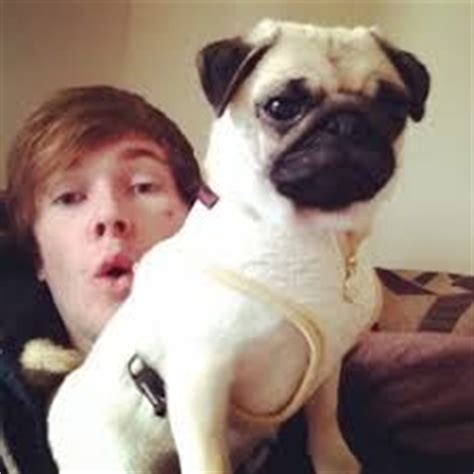 what are dantdm s pugs names 1000 images about minecart on minecraft the pug and pug