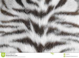 Giraffe Skin Rug White Tiger Skin Royalty Free Stock Photo Image 17663155