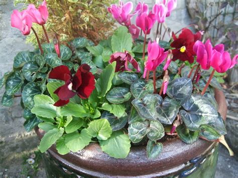 winter flowering shrubs for containers being potty grows on you