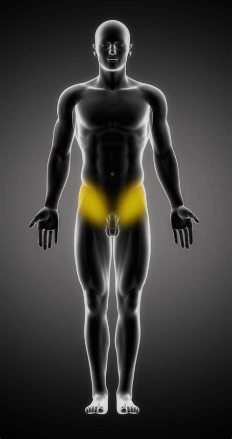 douleurs de la hanche sympt 244 mes traitement d 233 finition