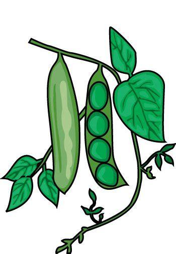 peas clipart vegetable clipart clipart 10 peas classroom clipart