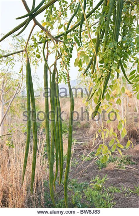 Subtropical Agriculture Stock Photos Subtropical Agriculture Stock Images Alamy