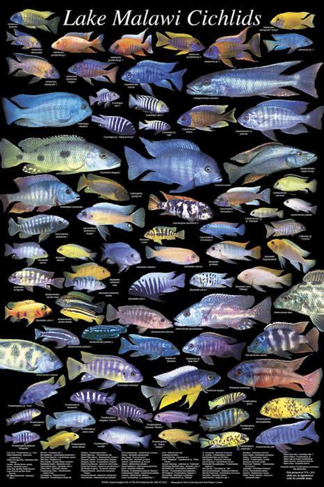 Aquascaping Rocks For Sale African Cichlids Lake Malawi