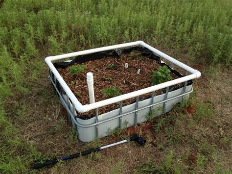 wicking garden bed wicking beds from ibc scrap red dirt oasis