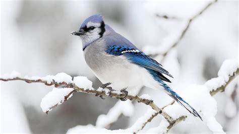 beautiful winter bird beautiful birds picture