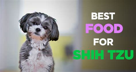 the best food for shih tzu shih tzu puppy food serving size