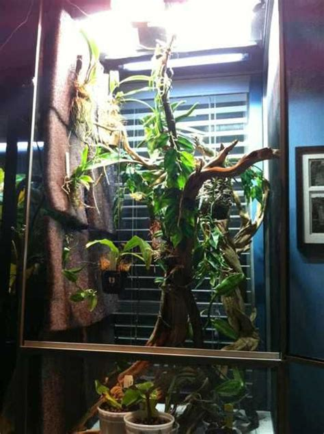 chameleon habitat cage examples images