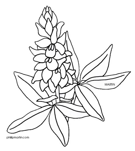 Bluebonnet Flower Coloring Page bluebonnet flower drawings sketch coloring page
