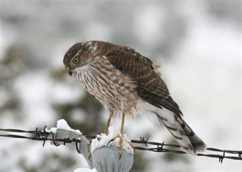 how to get birds to your feeder feeding birds feederwatch