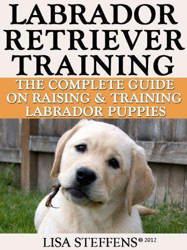 golden retriever guide best 25 labrador puppy ideas on