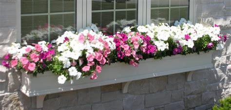 custom window boxes what size window boxes should you use hooks lattice