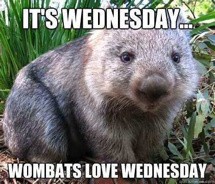 it s wednesday wombats love wednesday quotes