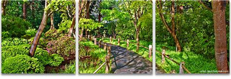 Define Botanical Garden Garden Stroll San Francisco Botanical Garden 3 Panel Artwork David Balyeat Photography Store