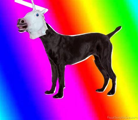 unicorn puppy unicorn