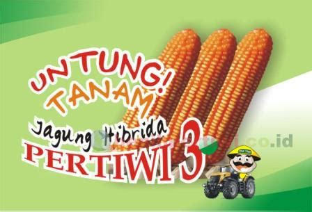 Benih Jagung Manis Pertiwi budidaya jagung hibrida pertiwi benih pertiwi