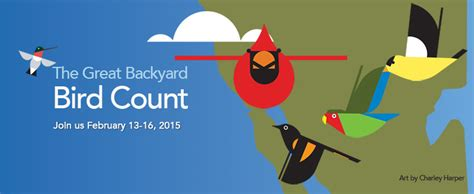 great american backyard bird count gbbc 2015 preview looking for new birds and new birders