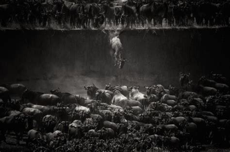contest 2014 state winners national geographic photo contest 2014 winners 11 fubiz