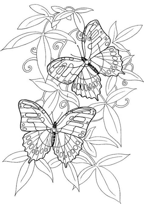 coloring book printouts for adults butterfly coloring page