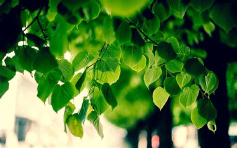 wallpaper green tree hd green tree images hd hd desktop wallpapers 4k hd