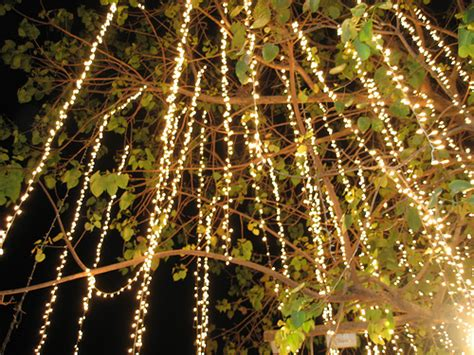 Twinkle Lights The Party Loft Twinkle Tree Lights