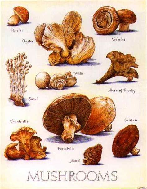 mushrooms growing in vegetable garden 100 mushrooms growing in vegetable garden grow your
