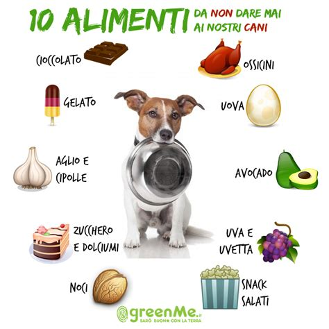 alimenti vietati ai cani 10 alimenti da non mai ai nostri cani greenme