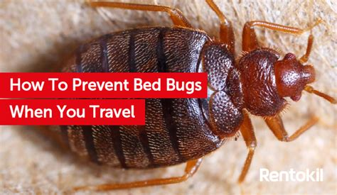 how bed bugs travel how to prevent bed bugs when you travel