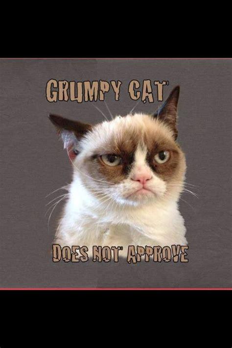 Grumpy Cat Wedding Meme - 810 best images about grumpy cat on pinterest gift