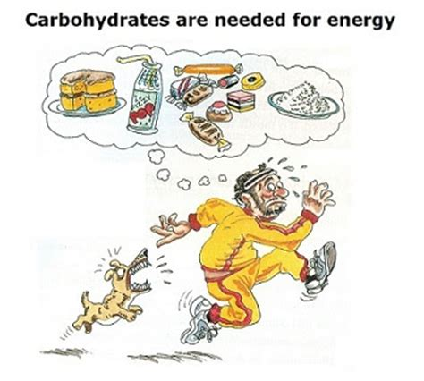 carbohydrates energy 29 nutrients carbohydrates fats and proteins