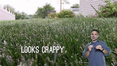 how to dull a blade dull mower blade ripped and shredded grass blades
