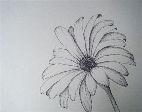 Sketches Flowers by Flower Sketch Illustration And Imagination