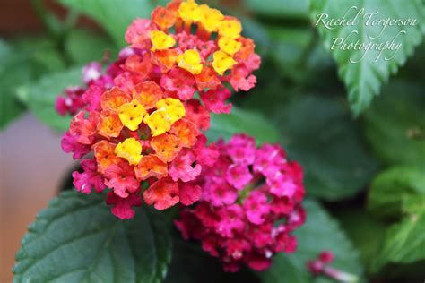 easy  maintenance garden flowers simplemost