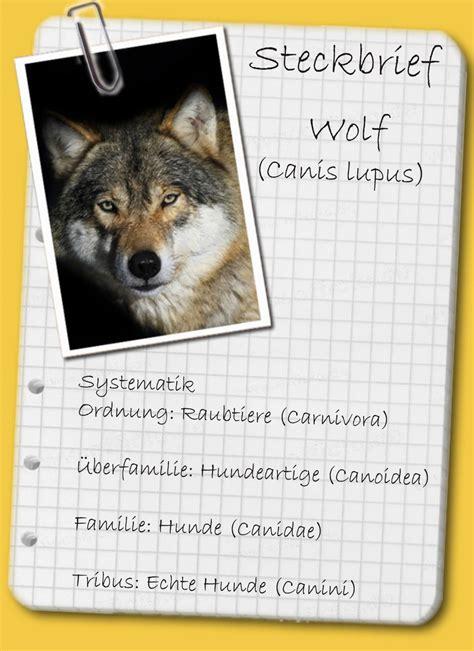 steckbrief der wolf ein mythos kehrt heim
