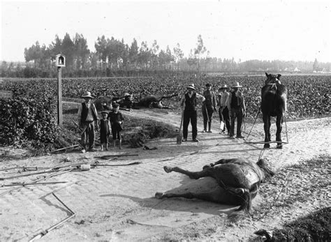 world war ii battles zoo black and white pictures of animals in world war i vintage everyday